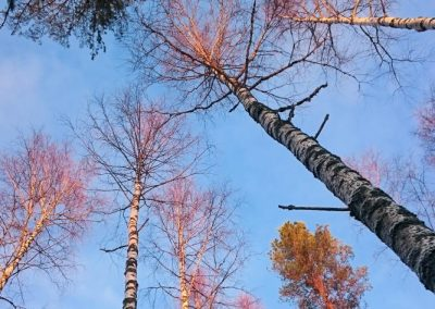 puun latvoja_